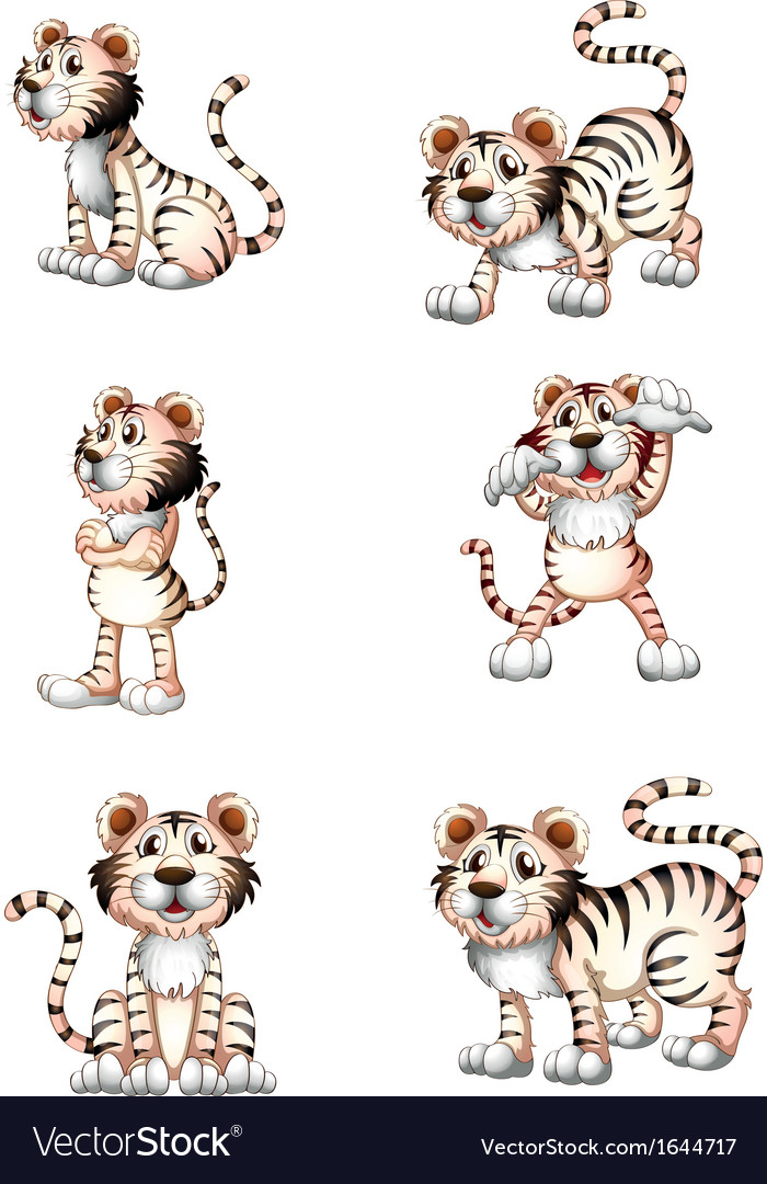 Tigers in six different positions vector | Price: 3 Credit (USD $3)