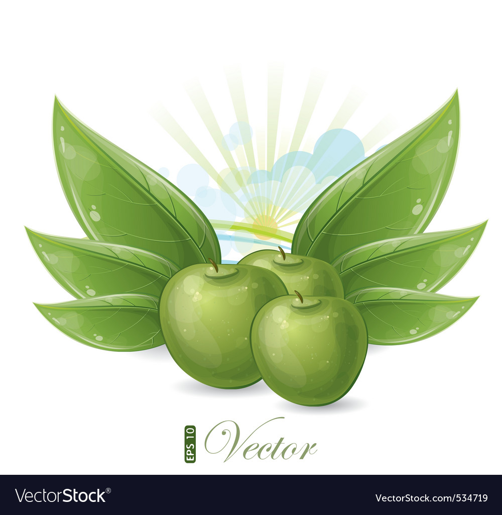Green apples and leaves against the sunshine vector | Price: 1 Credit (USD $1)