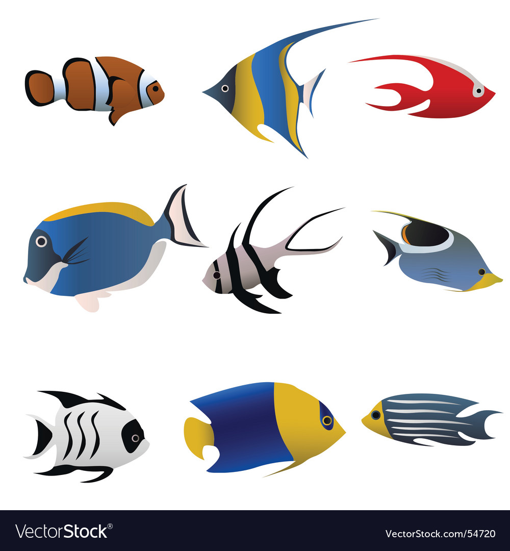 Tropical fish vector