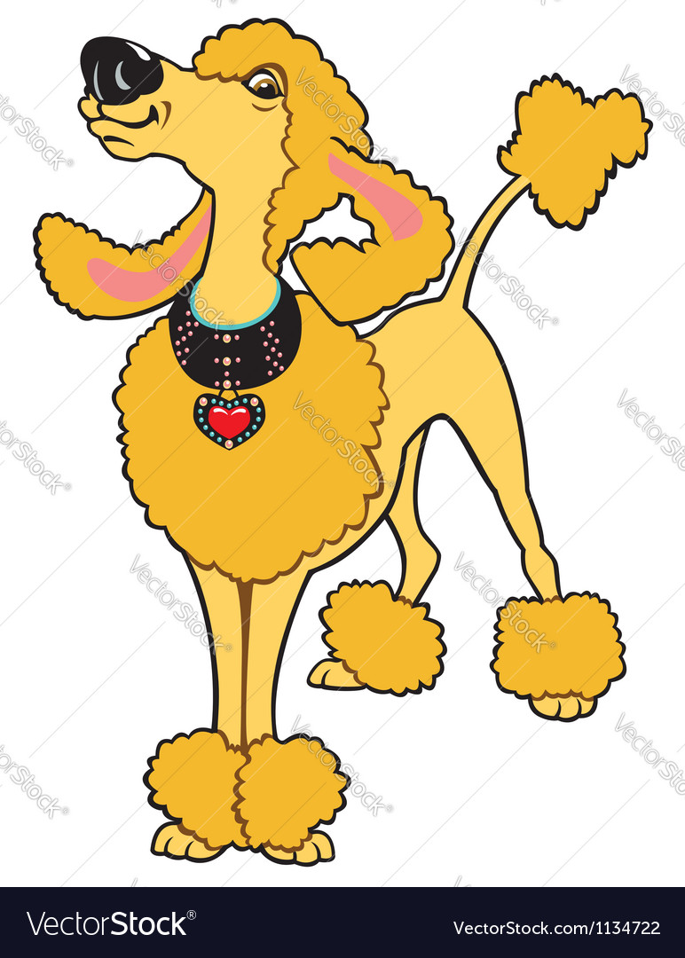 Cartoon poodle vector | Price: 1 Credit (USD $1)