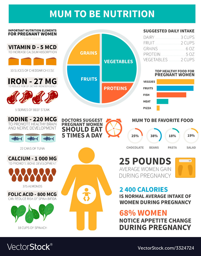 Pregnancy nutrition infographic vector | Price: 1 Credit (USD $1)