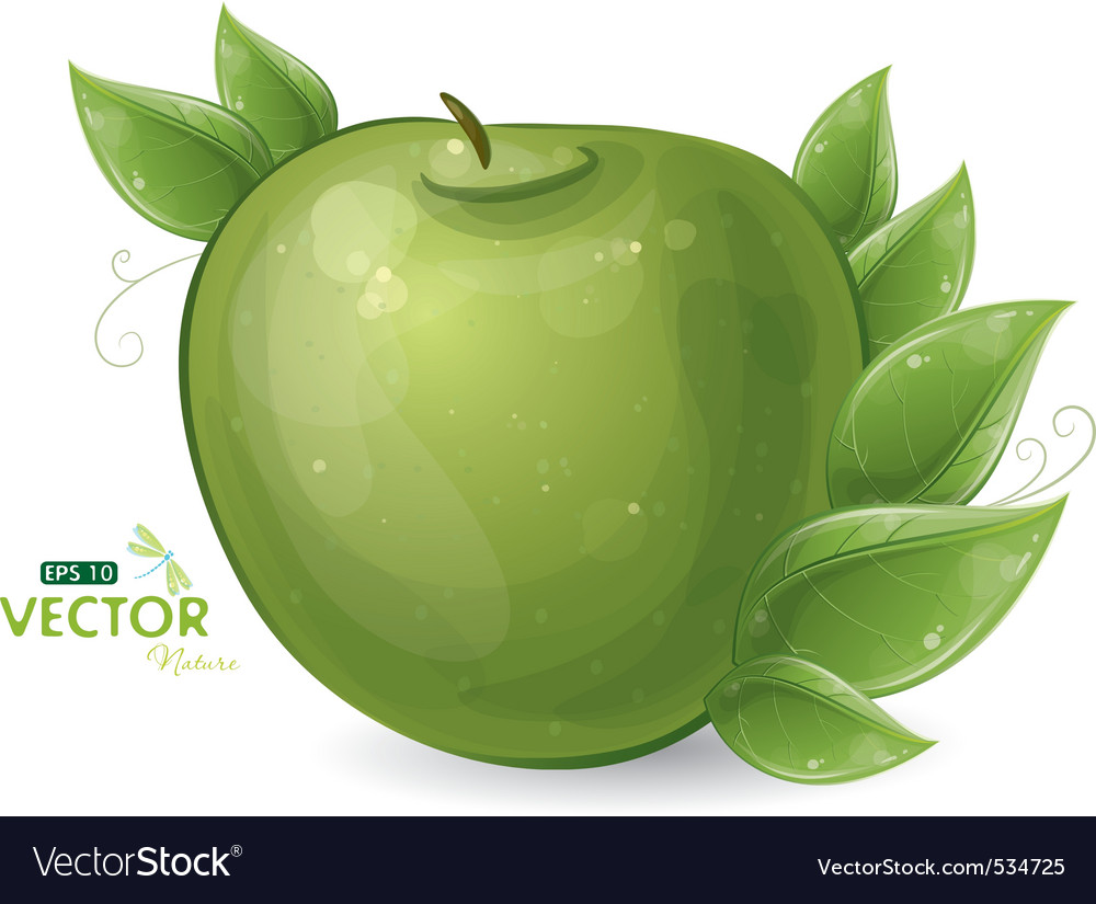 Green apple and leaves vector | Price: 1 Credit (USD $1)
