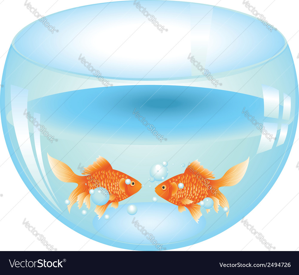 Gold fish in aquarium2 vector | Price: 1 Credit (USD $1)
