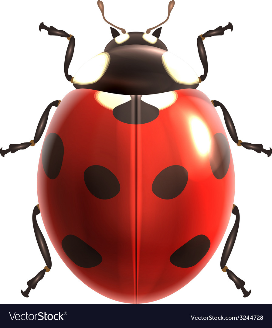 Ladybug realistic isolated vector | Price: 1 Credit (USD $1)