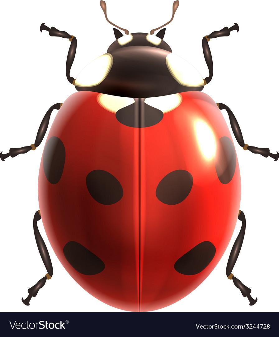 Ladybug realistic isolated vector | Price: 1 Credit (USD $1)