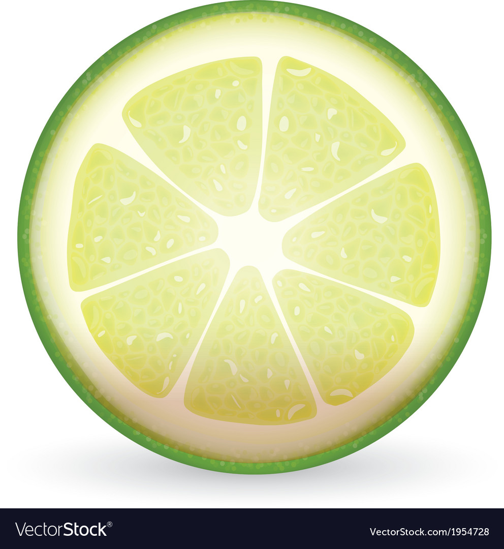 Sliced lime vector | Price: 1 Credit (USD $1)