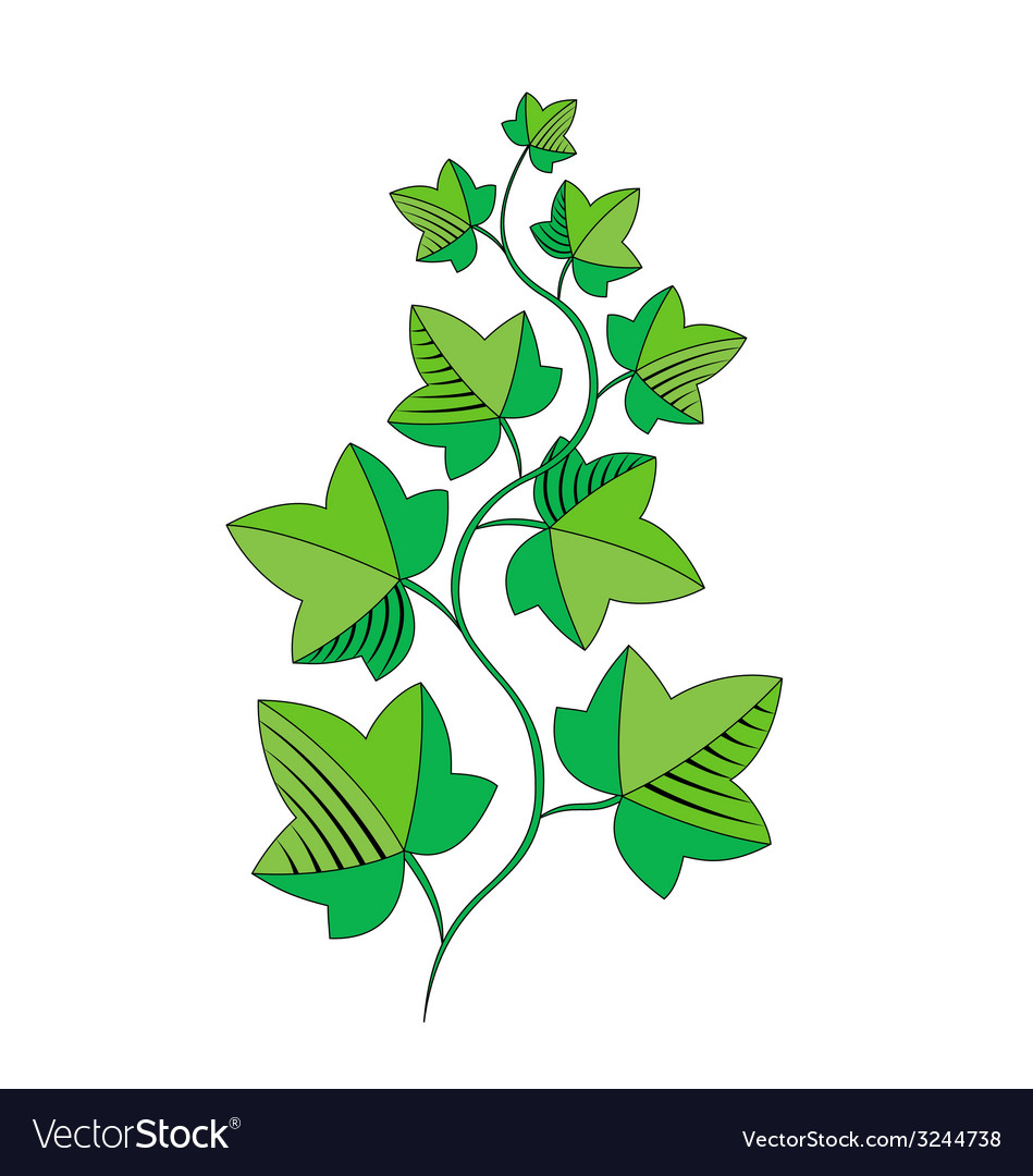 Sprig of ivy vector | Price: 1 Credit (USD $1)