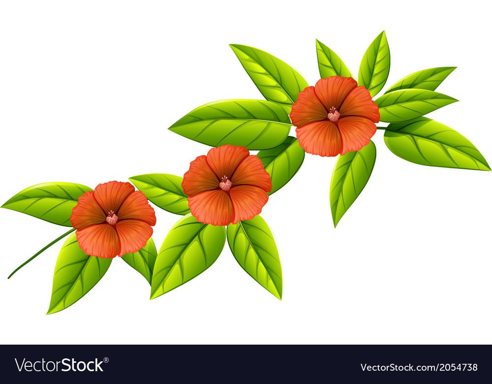 Three orange flowers vector   Price: 1 Credit (USD $1)
