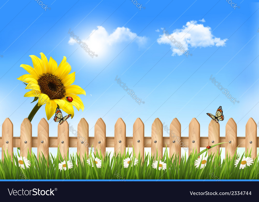 Summer nature background with sunflower and wooden vector | Price: 1 Credit (USD $1)