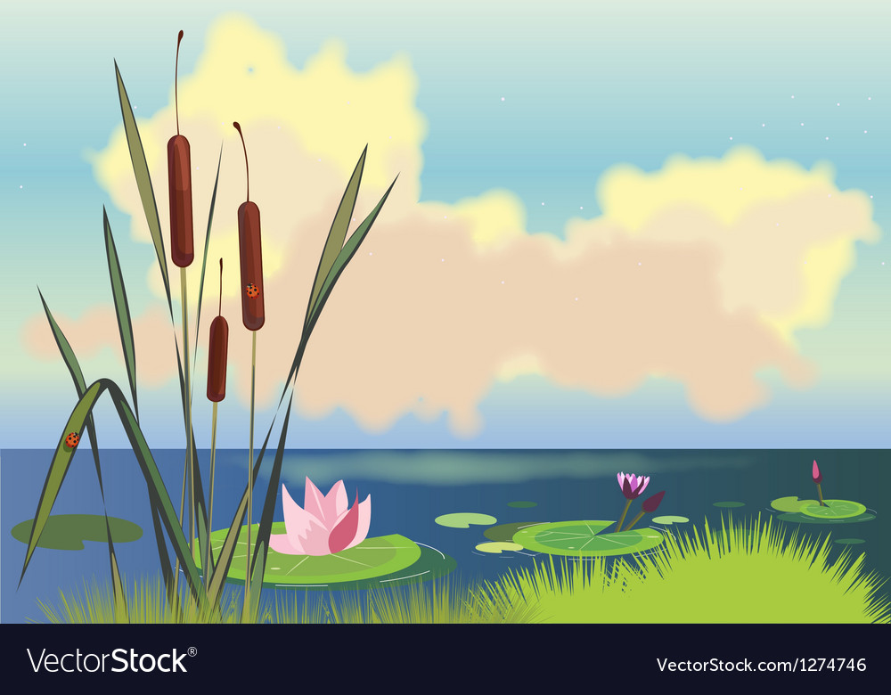 Lake cane and lotuses vector | Price: 1 Credit (USD $1)