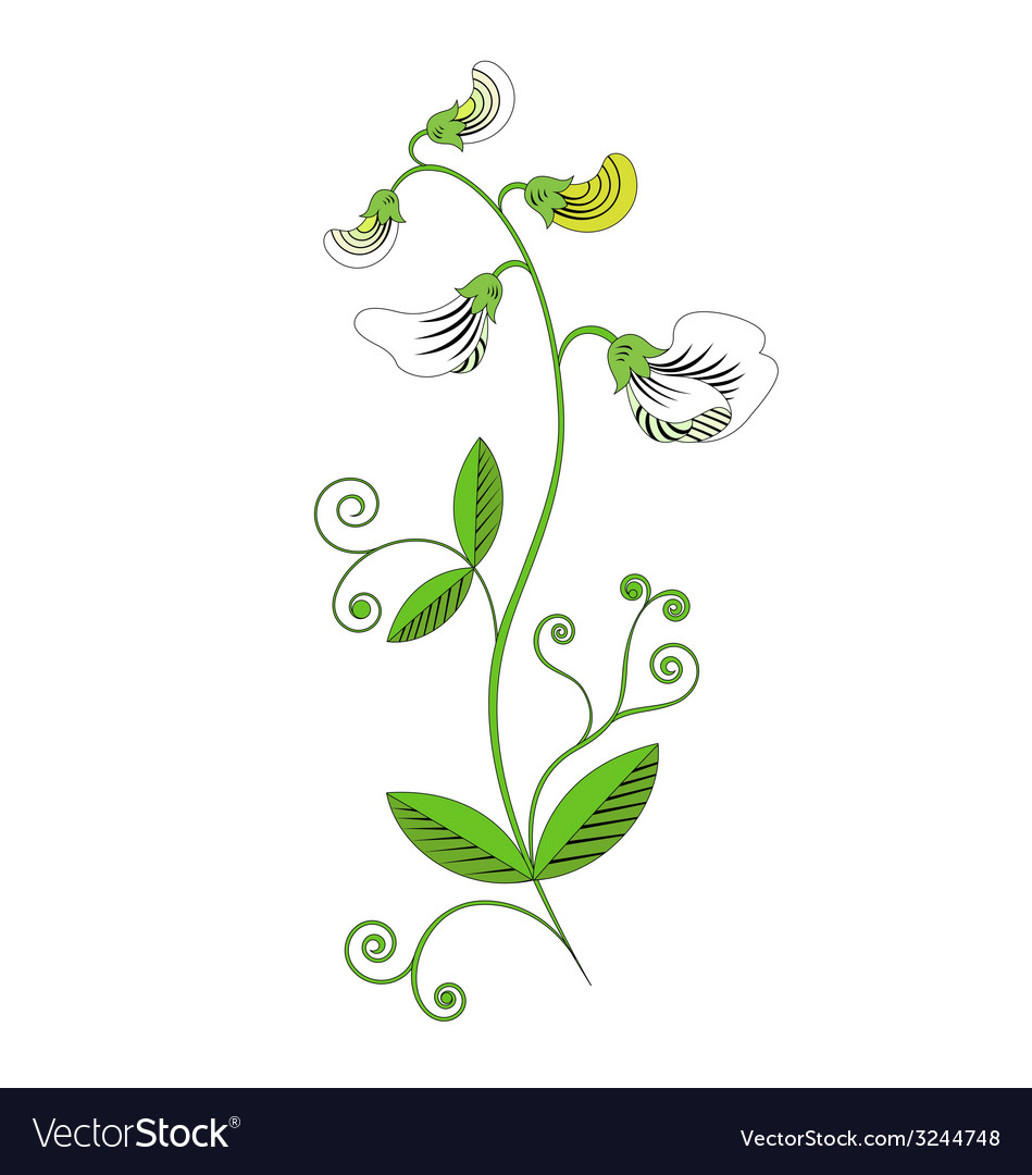 Sweet pea vector | Price: 1 Credit (USD $1)