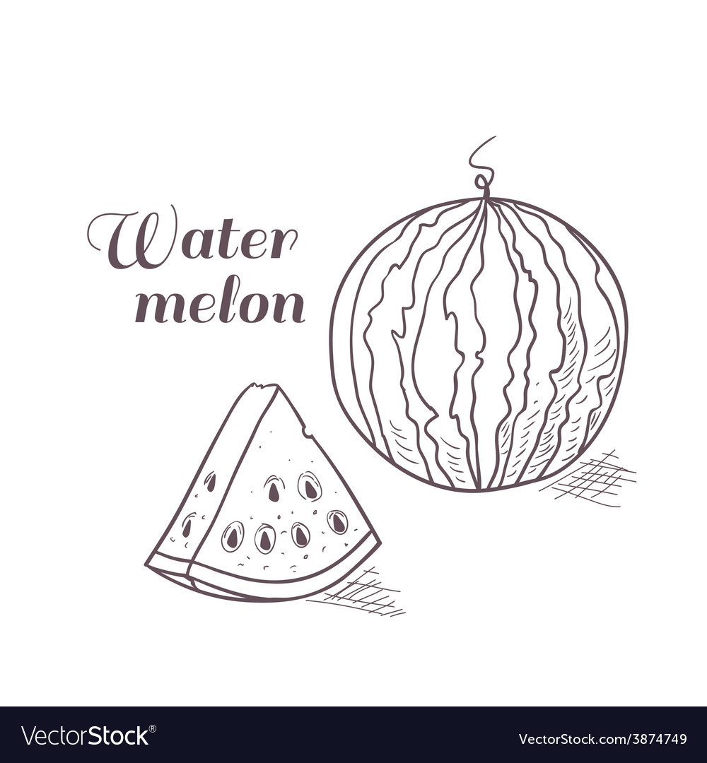 Engraved watermelon with slice vector | Price: 1 Credit (USD $1)