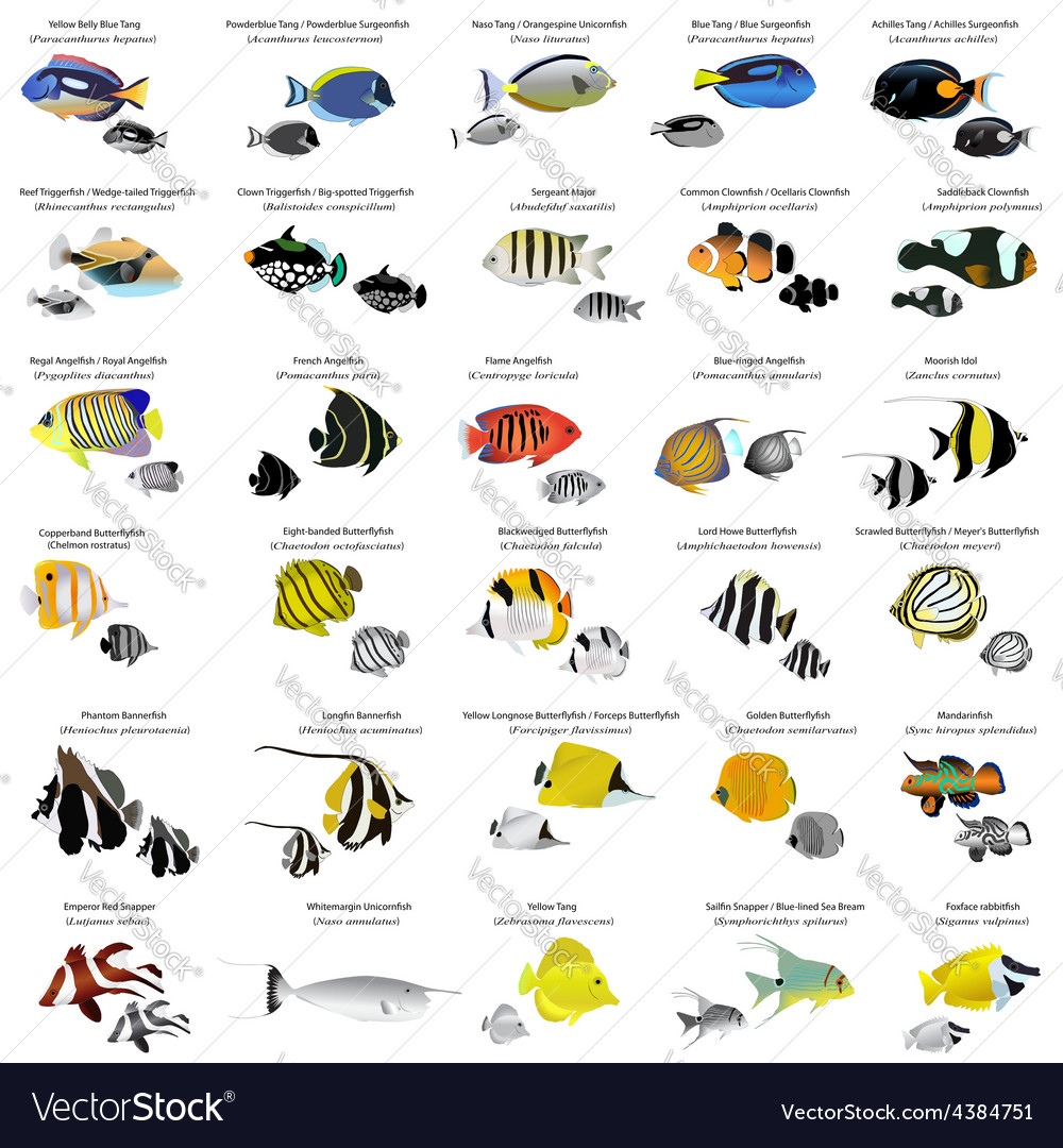 Marine fish vector