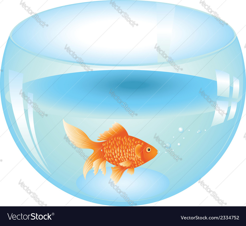 Gold fish in aquarium vector | Price: 1 Credit (USD $1)