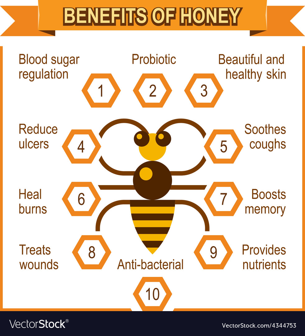 Infographic placard about benefits of honey vector | Price: 1 Credit (USD $1)