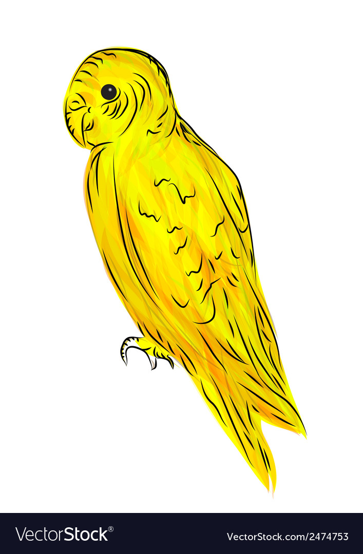 Parrot vector   Price: 1 Credit (USD $1)