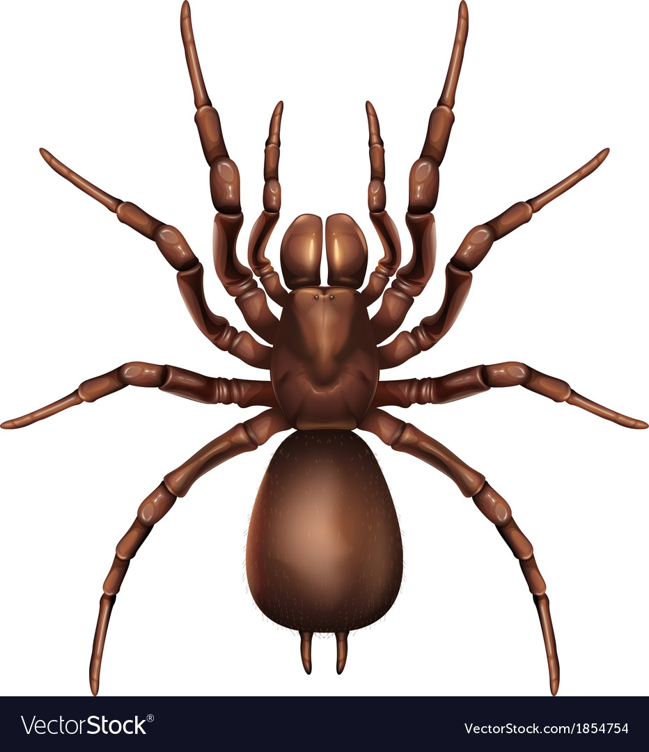 Sydney funnel-web spider vector | Price: 1 Credit (USD $1)