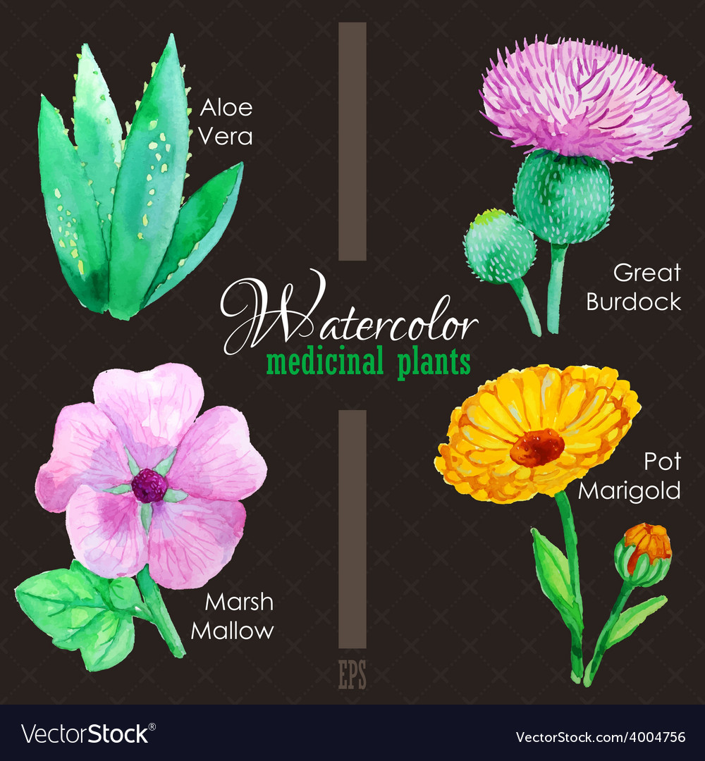 Set of watercolor madicinal plants vector | Price: 1 Credit (USD $1)