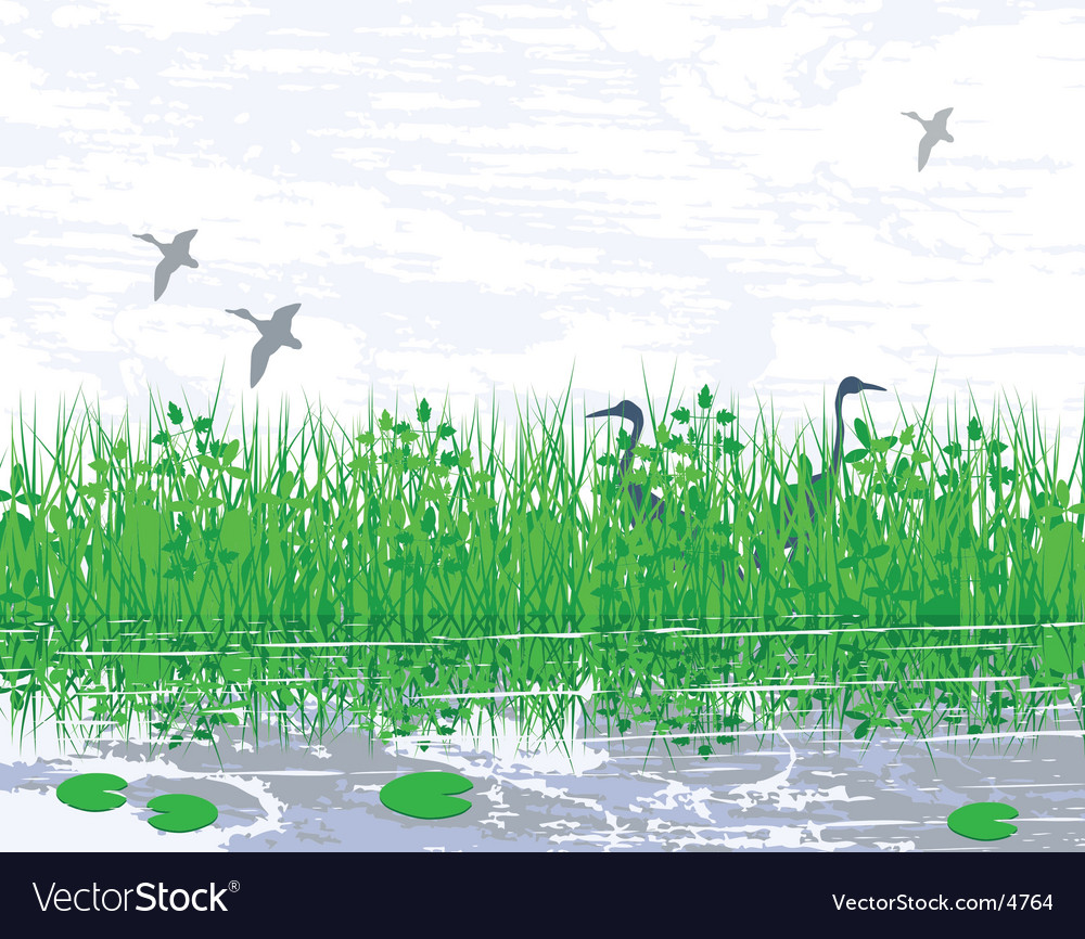 Marshland vector | Price: 1 Credit (USD $1)