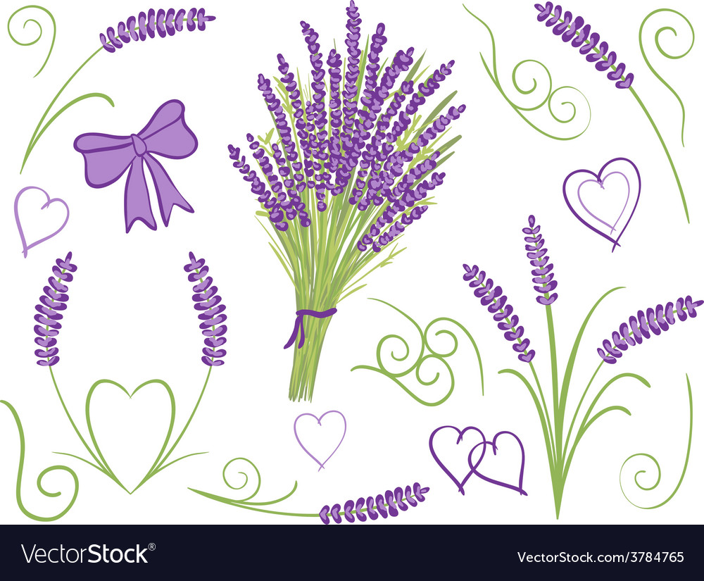 Lavender design elements vector