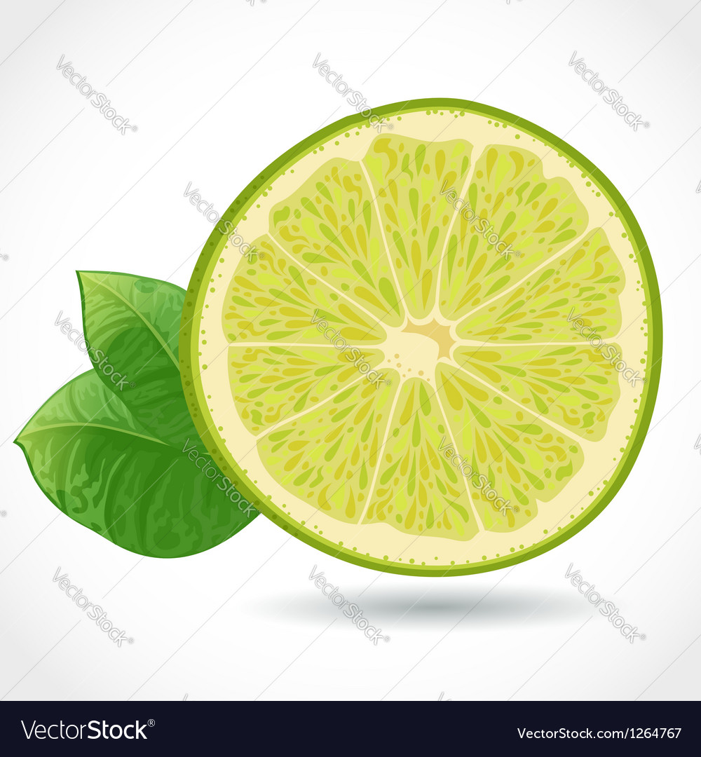 Fresh juicy piece of lime isolated on white vector | Price: 3 Credit (USD $3)