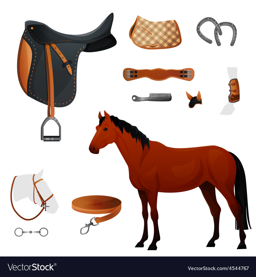 Set of equestrian equipment for horse vector | Price: 3 Credit (USD $3)
