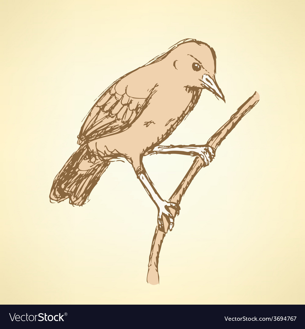 Sketch rufous hornero bird in vintage style vector | Price: 1 Credit (USD $1)