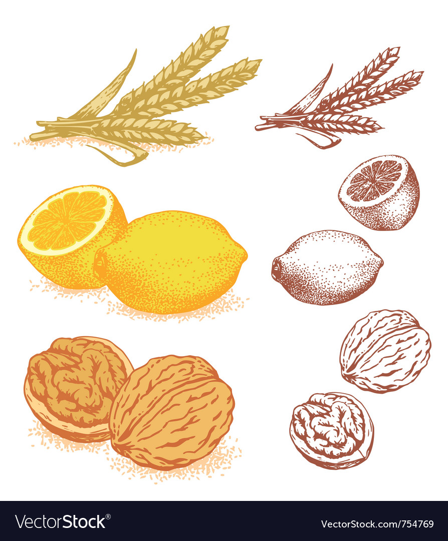 Grains lemons walnuts vector | Price: 1 Credit (USD $1)