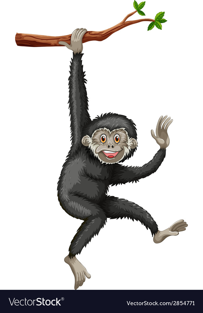 Gibbon vector | Price: 1 Credit (USD $1)