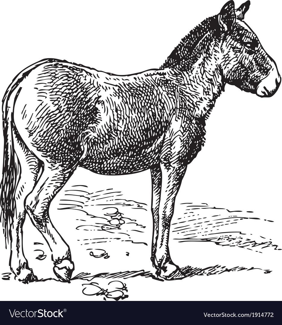 Donkey vector | Price: 3 Credit (USD $3)