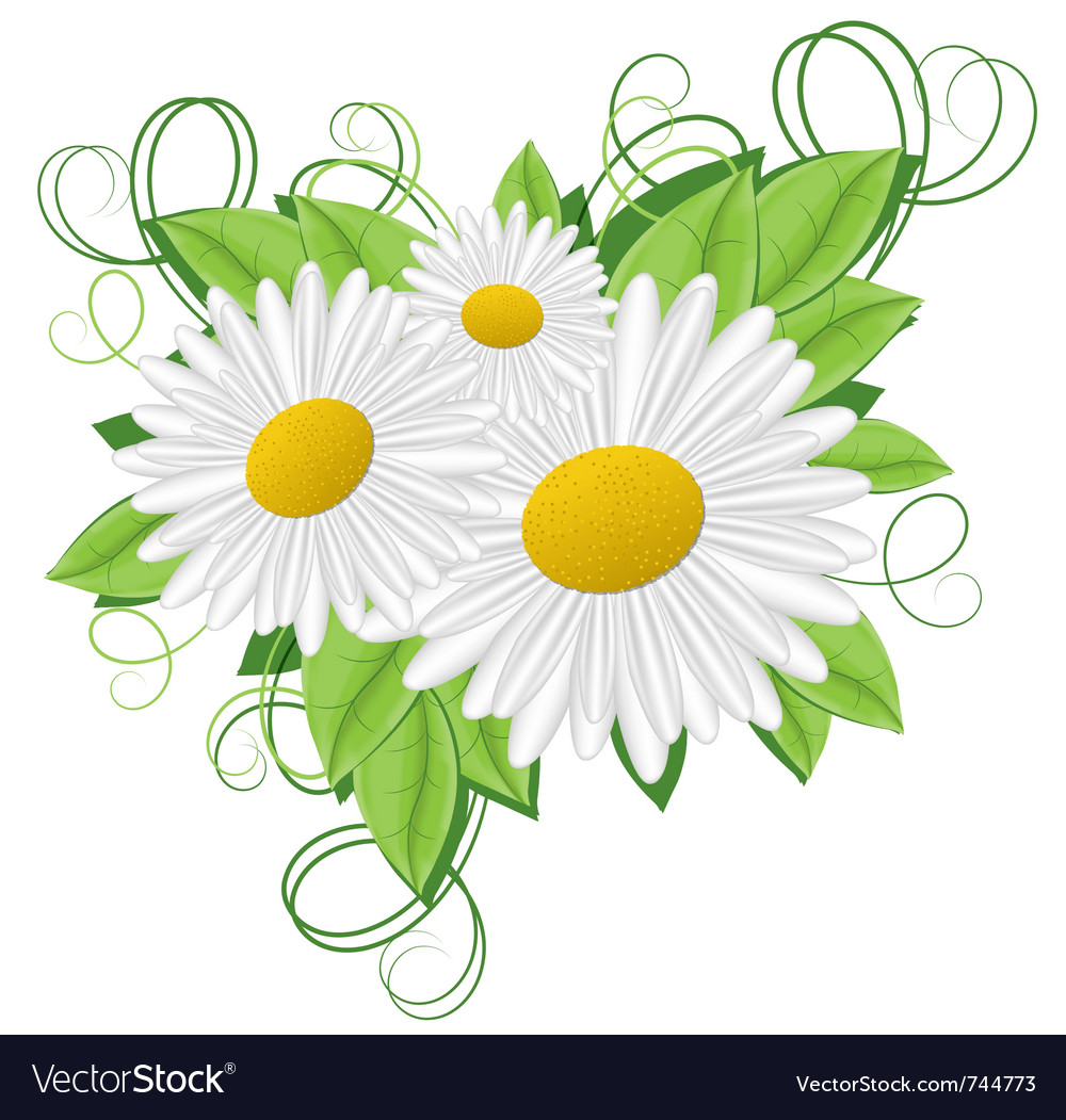 Flower camomile vector | Price: 1 Credit (USD $1)