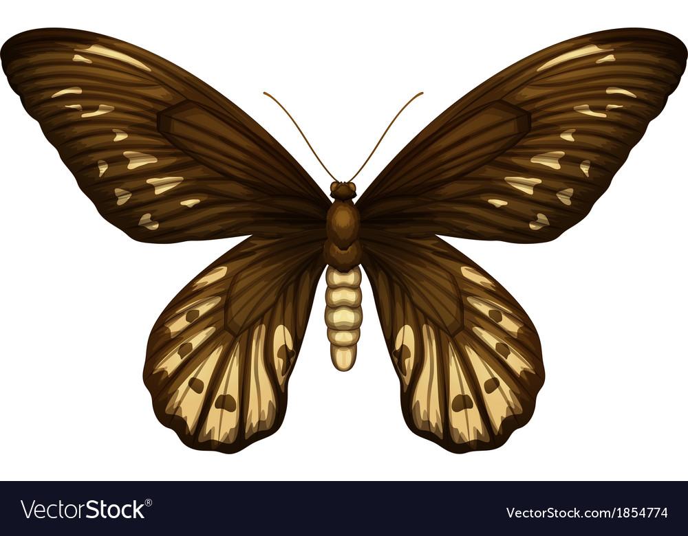 Queen alexandras birdwing vector   Price: 1 Credit (USD $1)