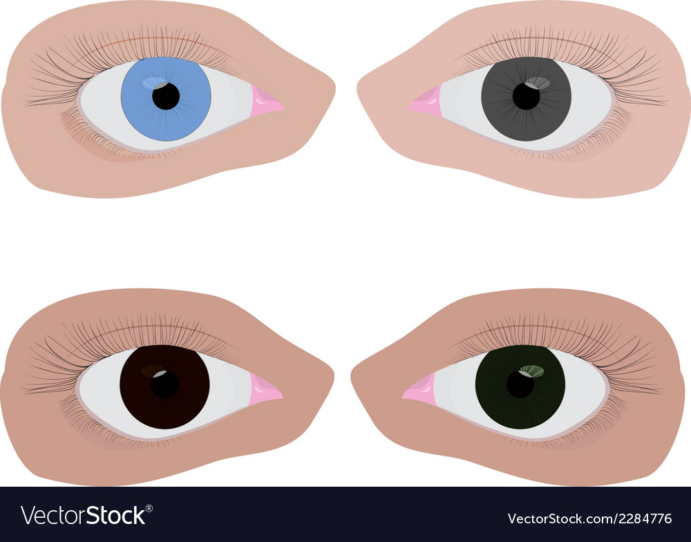 Four different colour eyes vector | Price: 1 Credit (USD $1)