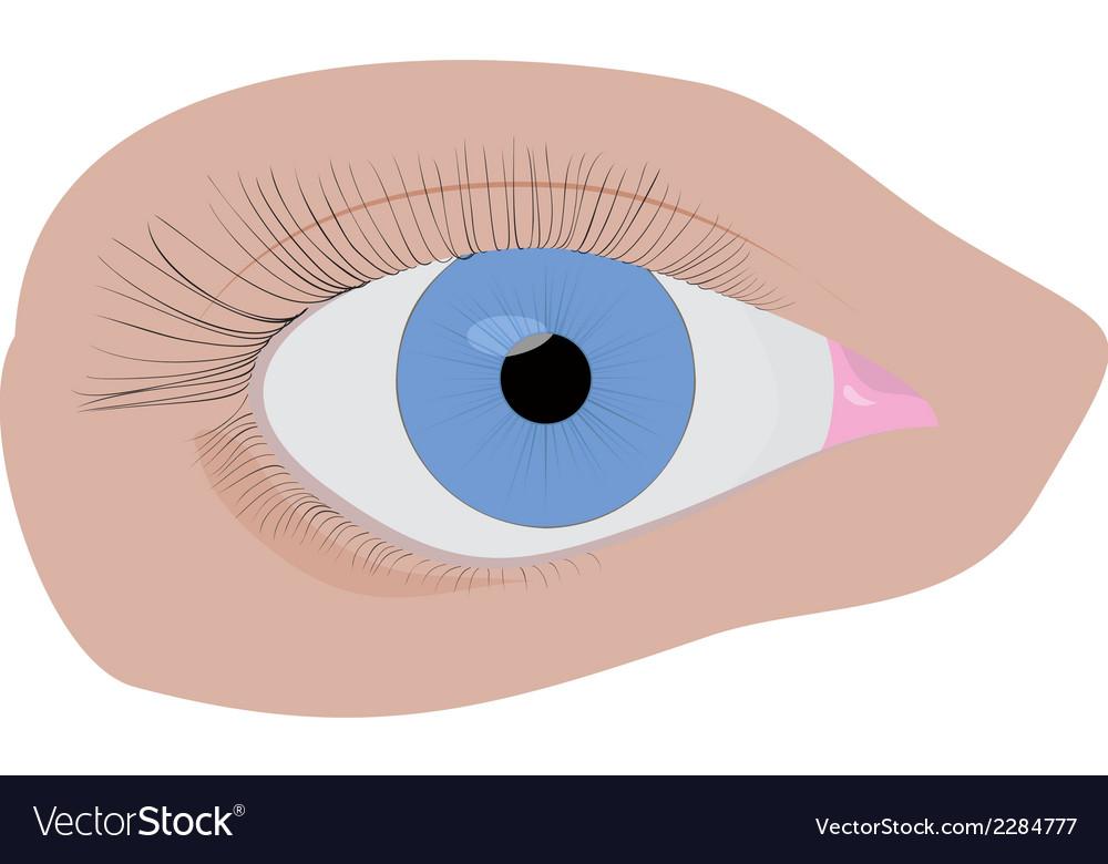 Blue eye vector | Price: 1 Credit (USD $1)