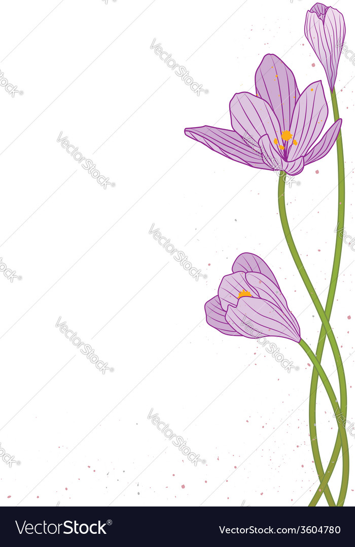 Crocus vector | Price: 1 Credit (USD $1)