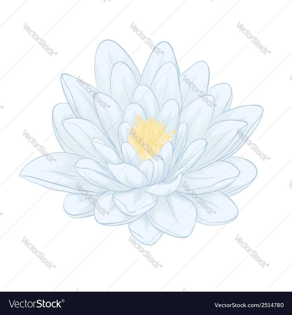 Lotus flower painted in graphic style isolated vector | Price: 1 Credit (USD $1)