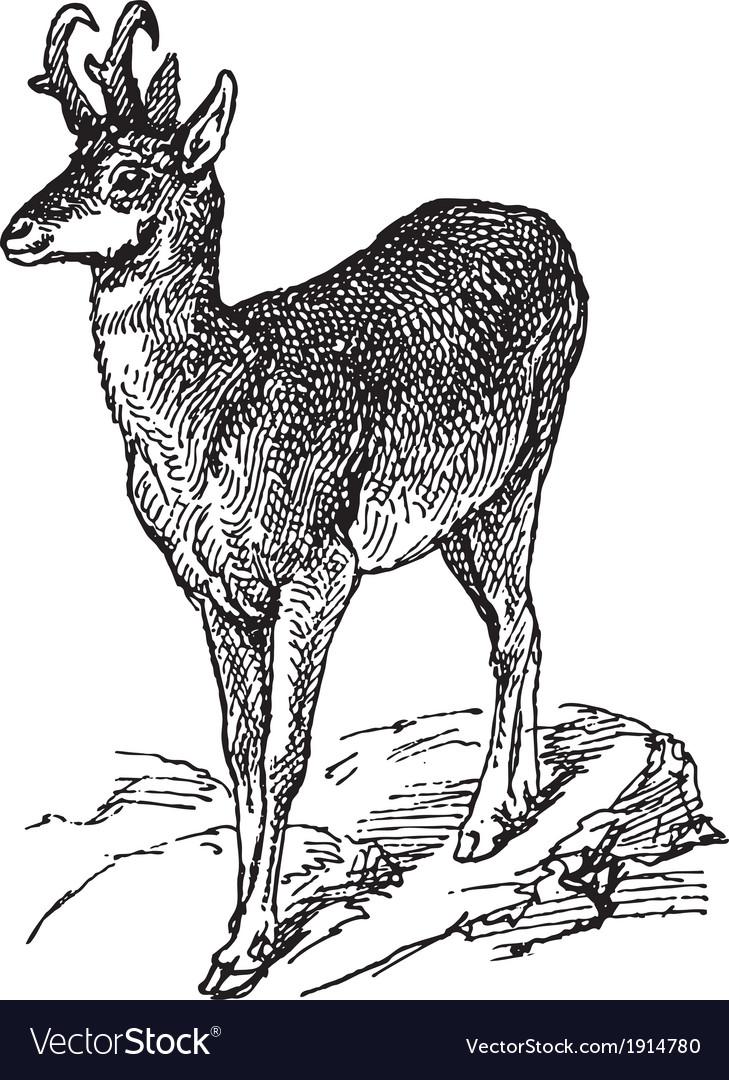 Wild deer vector | Price: 3 Credit (USD $3)
