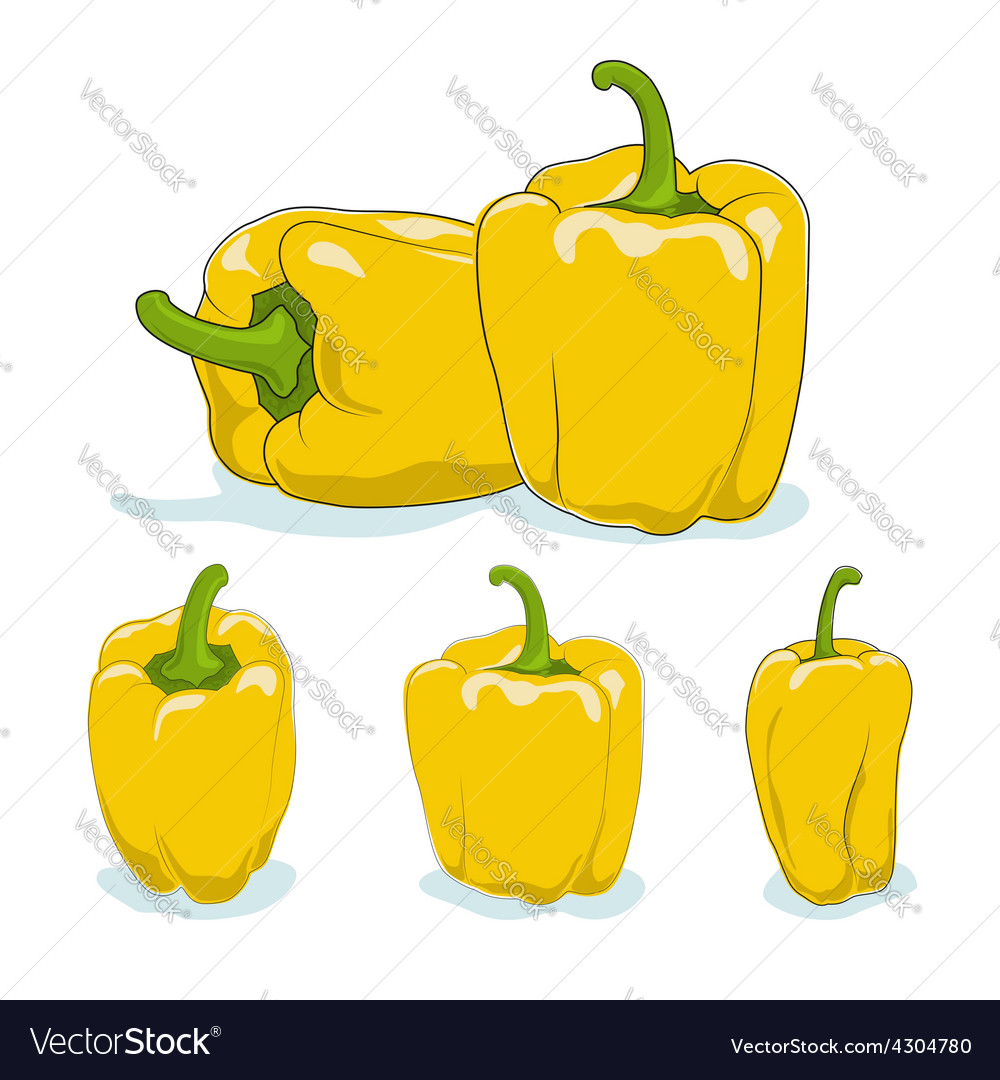 Yellow bell peppersweet pepper or capsicum vector | Price: 1 Credit (USD $1)