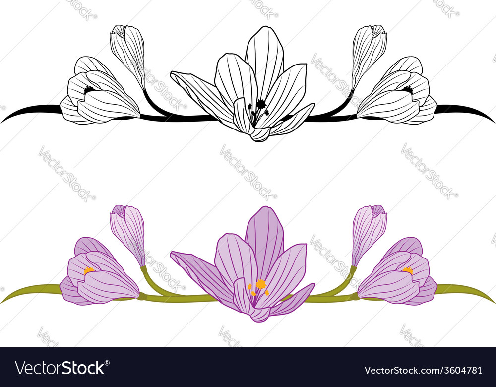 Crocus set vector | Price: 1 Credit (USD $1)