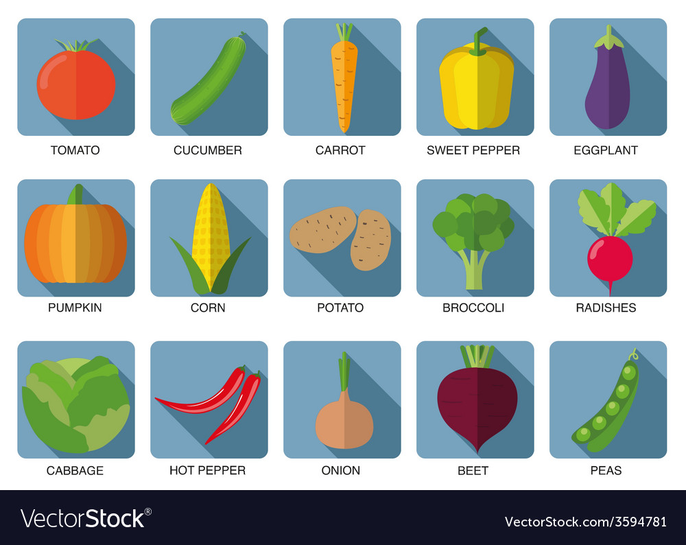 Vegetable icon set the image of vegetables symbol vector | Price: 1 Credit (USD $1)