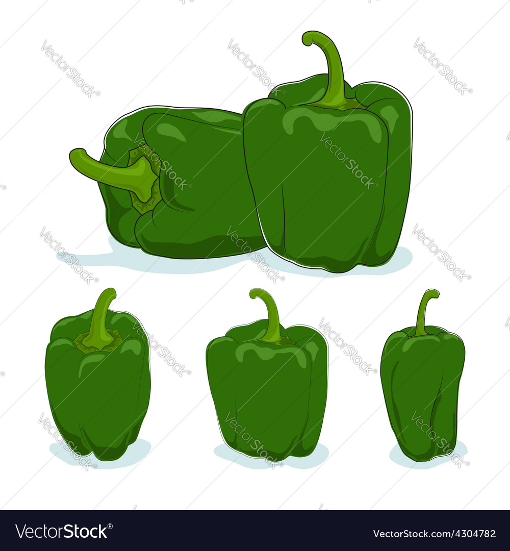 Green bell peppersweet pepper or capsicum vector | Price: 1 Credit (USD $1)