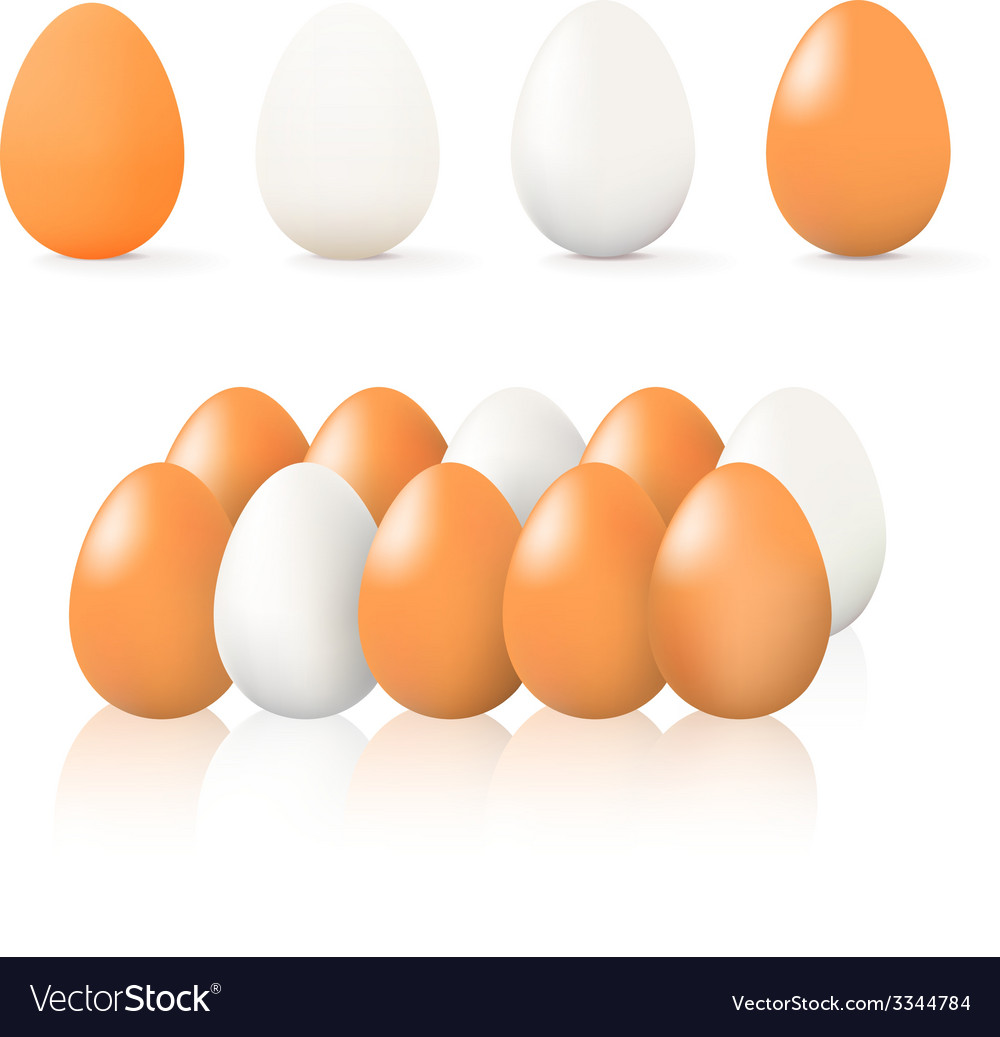 Brown and white egg vector | Price: 1 Credit (USD $1)