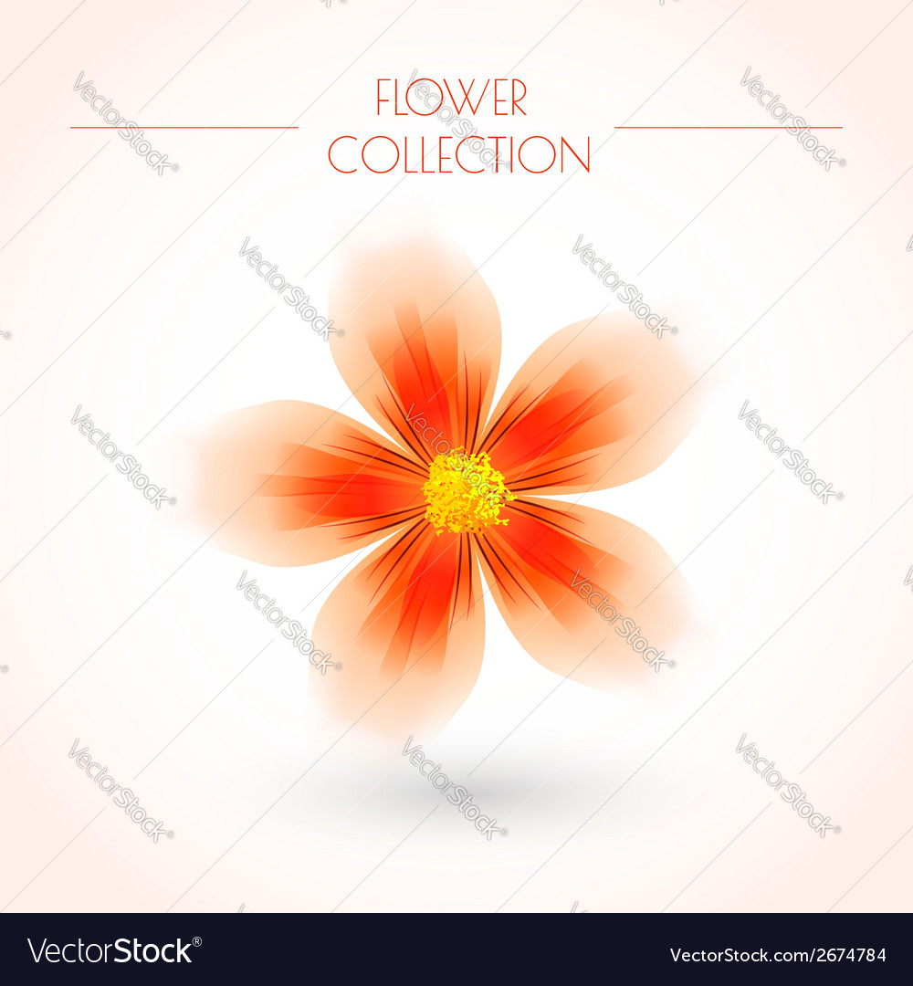 Colorful flower isolated on white vector | Price: 1 Credit (USD $1)