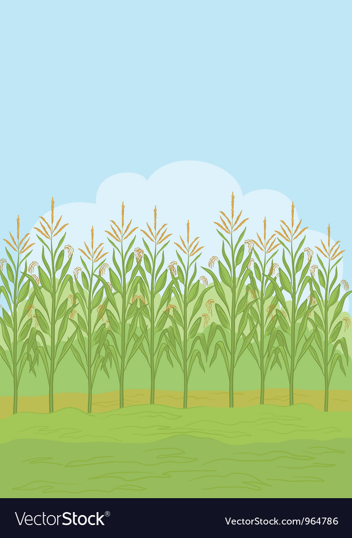 Field with maize vector | Price: 1 Credit (USD $1)