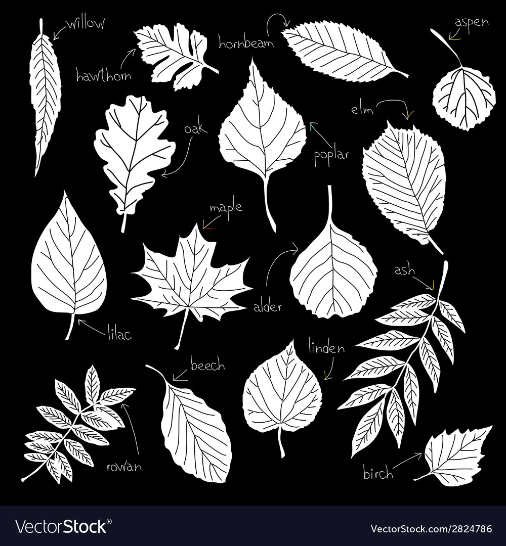 Leafs icons vector | Price: 1 Credit (USD $1)