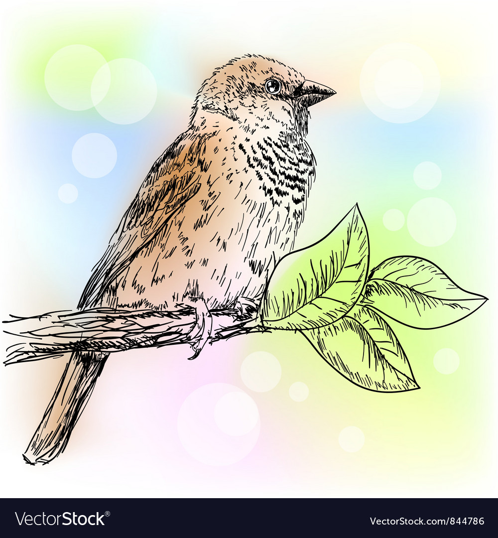 Sparrow vector | Price: 1 Credit (USD $1)