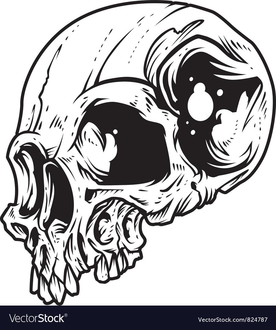 Skull vector | Price: 3 Credit (USD $3)
