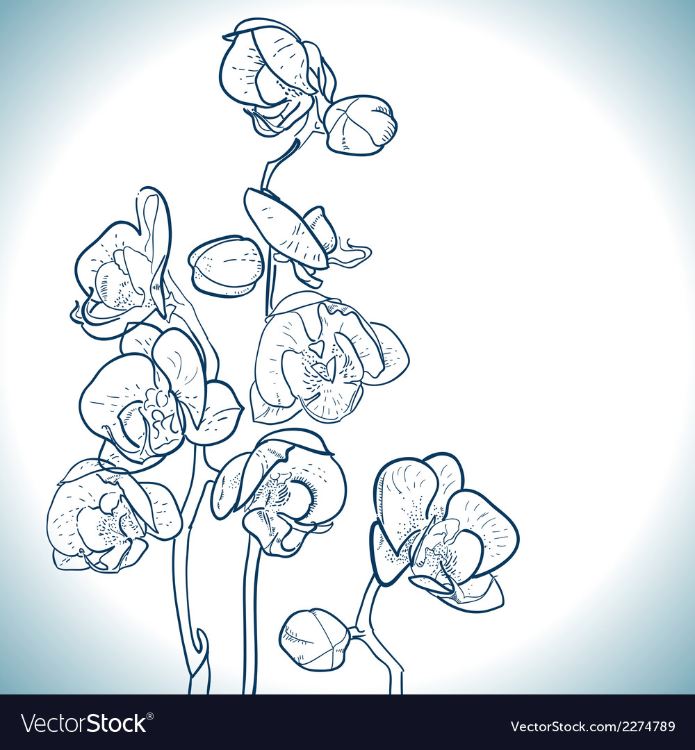 Orchid isolated on white vector | Price: 1 Credit (USD $1)