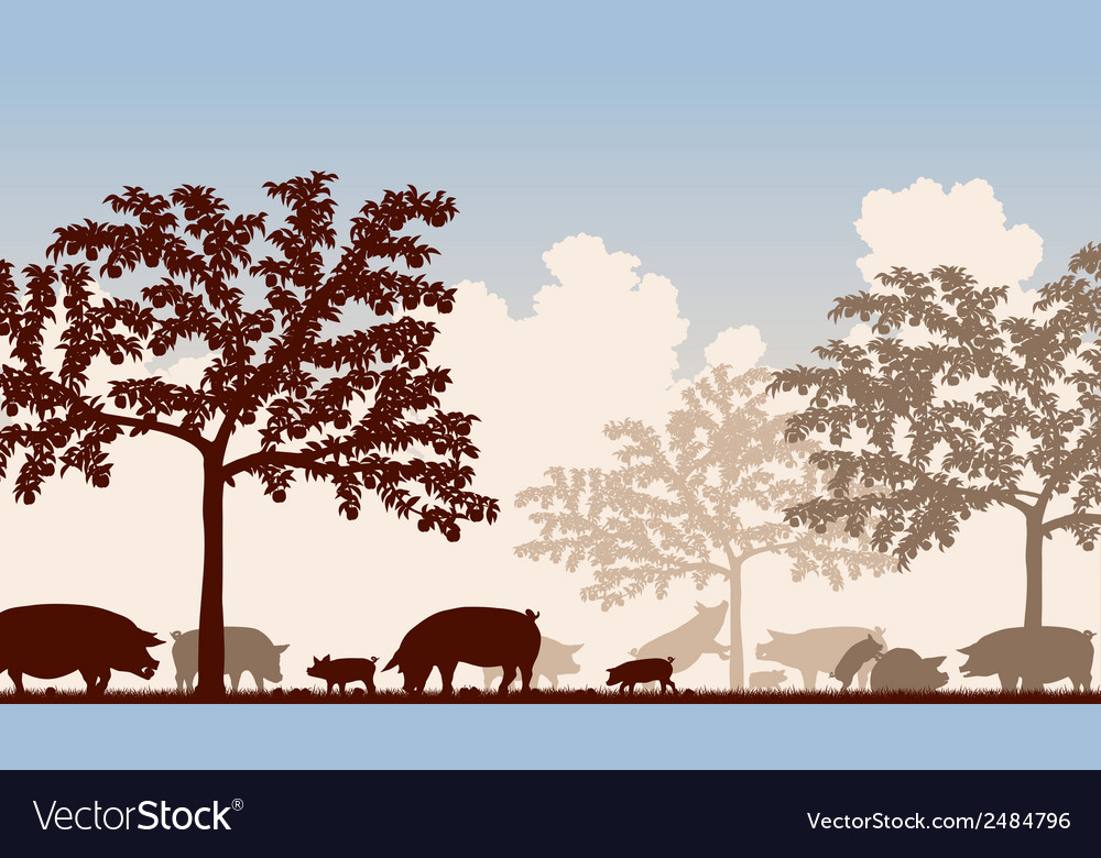 Orchard pigs vector | Price: 1 Credit (USD $1)