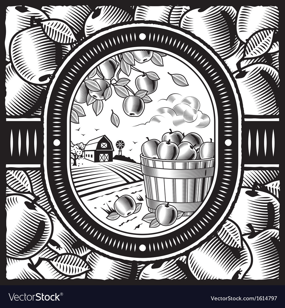 Apple harvest black and white vector | Price: 1 Credit (USD $1)